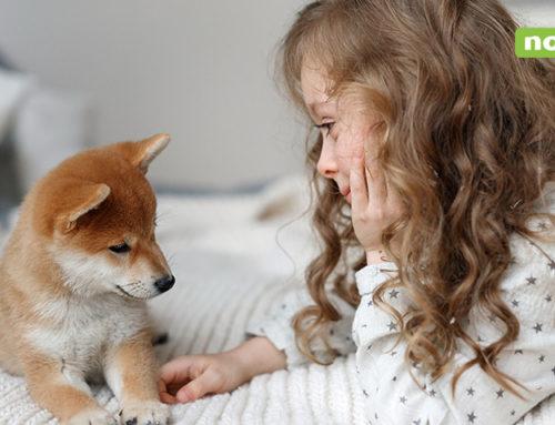 Beneficios de tener perro para los niños